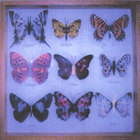 Hoonose - Man Made Butterflies
