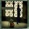 Jim Lauderdale - The Bluegrass Diaries