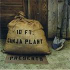 10 Ft. Ganja Plant - Presents