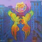 Four Tops - Night Lights Harmony (Vinyl)