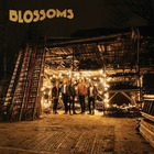 Blossoms - Blossoms