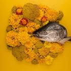 Fish Eyes (EP)