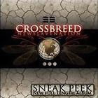 Sneak Peek (EP)