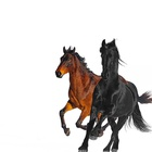 Lil Nas X - Old Town Road (Remix) (CDS)