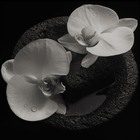 Corpse Flower (& Jean-Claude Vannier)